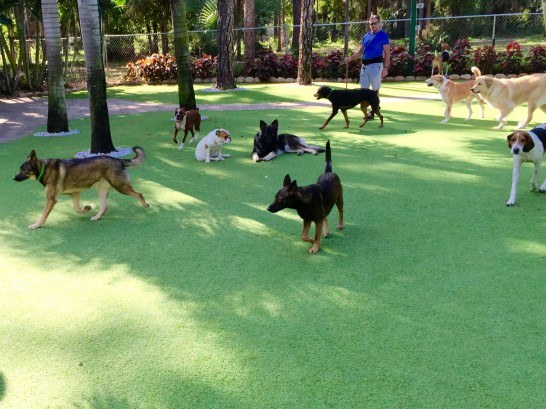 Artificial Grass Photos: Artificial Turf Cost San Carlos, Arizona Artificial Grass For Dogs, Grass for Dogs