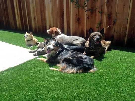 Artificial Grass Photos: Fake Grass Red Rock, Arizona Drainage, Dogs